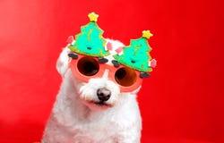 Weihnachtshündchen lizenzfreie stockbilder