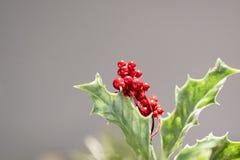 Weihnachtshintergrund auf grauem Hintergrund stockfoto