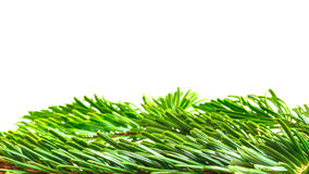 Weihnachtshintergrund: grüne Tannenzweiggrenze lokalisiert auf Weiß Stockbild