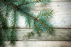 Weihnachtshintergrund mit einer natürlichen Kiefernniederlassung lizenzfreies stockbild