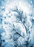 Weihnachtshintergrund mit eisiger Kiefer Lizenzfreie Stockbilder