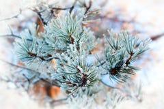Weihnachtshintergrund mit eisiger Kiefer Lizenzfreies Stockfoto