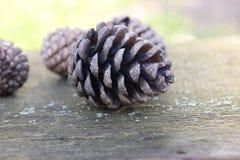 Weihnachtshintergrund mit Kiefernkegeln im Weinleseton Lizenzfreies Stockbild