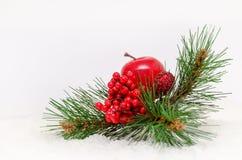 Weihnachtshintergrund mit roten Beeren, Apfel und Lizenzfreies Stockbild