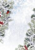 Weihnachtshintergrund mit schneebedeckten Niederlassungen und Dompfaff Lizenzfreies Stockfoto