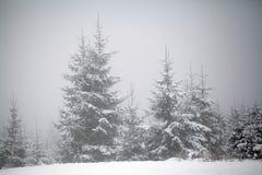 Weihnachtshintergrund mit schneebedeckten Tannenbäumen Lizenzfreie Stockbilder