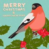 Weihnachtshintergrund und Grußkarte mit Dompfaff und Stechpalme Stockbild