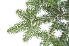 Weihnachtshintergrundgrüntannen-Zweigbeschaffenheit Lizenzfreie Stockbilder