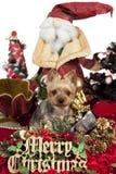 Weihnachtshund Stockfotos