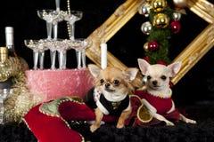 Weihnachtshund Stockfoto
