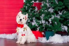 Weihnachtshund als Symbol des neuen Jahres stockfotografie