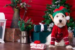Weihnachtshund als Symbol des neuen Jahres stockbild