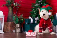 Weihnachtshund als Symbol des neuen Jahres lizenzfreies stockfoto