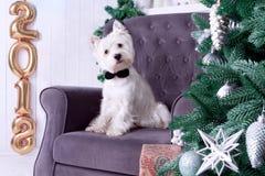 Weihnachtshund als Symbol des neuen Jahres stockbilder