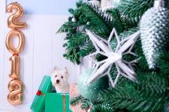 Weihnachtshund als Symbol des neuen Jahres lizenzfreie stockbilder