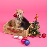 Weihnachtshund, der neues Jahr-Baum verziert Lizenzfreie Stockbilder