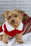 Weihnachtshund mit einem Geschenk Lizenzfreies Stockfoto