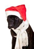 Weihnachtshund mit Geschenken Stockfoto