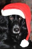 Weihnachtshund mit rotem und weißem Sankt-Hut Stockfotos