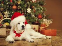 Weihnachtshund, weißer Welpenretriever in Sankt-Hut, Weihnachtsbaum lizenzfreie stockfotos