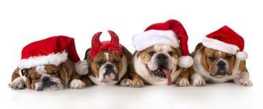 weihnachtshunde stockbild bild von bulldogge hund. Black Bedroom Furniture Sets. Home Design Ideas