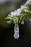 Weihnachtsimmergrüne Kiefer bedeckt mit frischem Schnee Stockfotos