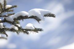Weihnachtsimmergrüner gezierter Baum mit Schnee Lizenzfreies Stockbild