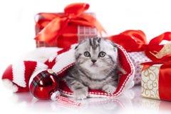 Weihnachtskätzchen Lizenzfreies Stockfoto