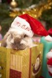 Weihnachtskaninchen lizenzfreie stockbilder