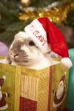 Weihnachtskaninchen Stockfoto