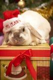 Weihnachtskaninchen stockfotos