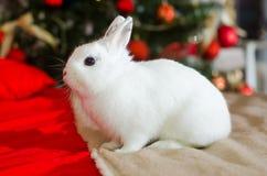 Weihnachtskaninchen lizenzfreies stockfoto
