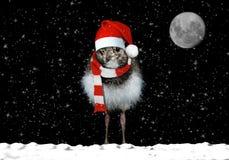 Weihnachtskarte mit Vogel lizenzfreies stockfoto