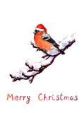 Weihnachtskarte - Vogel im roten Hut an der Niederlassung mit Schnee watercolor Lizenzfreie Abbildung
