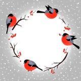 Weihnachtskartenschablone mit netten Dompfaffen Lizenzfreie Stockbilder