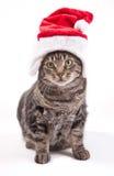 Weihnachtskatze Stockbild