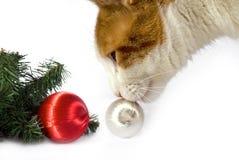 Weihnachtskatze Stockbilder