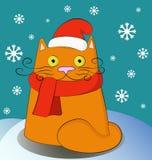 Weihnachtskatze, die Sankt-Hut trägt Lizenzfreie Stockfotos