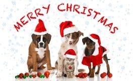 Weihnachtskatze und -hunde Stockfotos