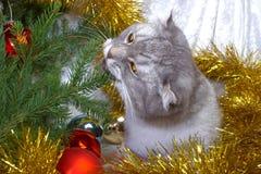Weihnachtskatze unter einem Pelzbaum stockfotos