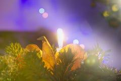 Weihnachtskerzen- und -baumlichter lizenzfreie stockbilder