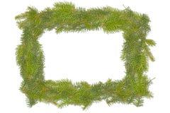 Weihnachtskiefer-Blattfeld lizenzfreie stockfotos