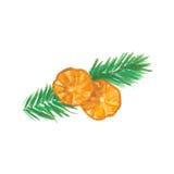 Weihnachtskiefern-Zweige mit Orange Lizenzfreie Stockbilder