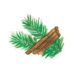 Weihnachtskiefern-Zweige mit Zimt Lizenzfreies Stockbild