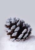 Weihnachtskiefernkegel im Schnee Lizenzfreie Stockfotos