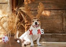 Weihnachtskonzept mit Hundeden tragenden Rengeweihen, die 'Zeichen Weihnachten halten stockfotografie