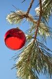 Weihnachtskugel, im Wald Lizenzfreie Stockfotos