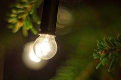 Weihnachtslampe, die auf einem Zweig eines Weihnachtsbaums hängt Grünes Blatt mit einem großen Wassertropfen Stockbild