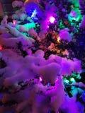 Weihnachtslichter auf einem schneebedeckten Busch Stockfotografie