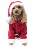 Weihnachtsmann Cutie Lizenzfreies Stockfoto